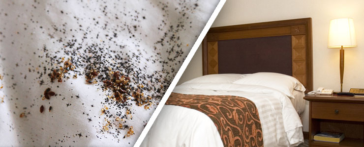 Corrective Bed Bug