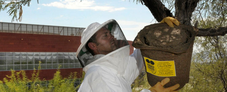 Preventative Bee Monitoring