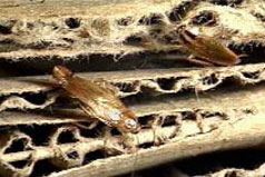 Roaches make exit from stack of cardboard boxes