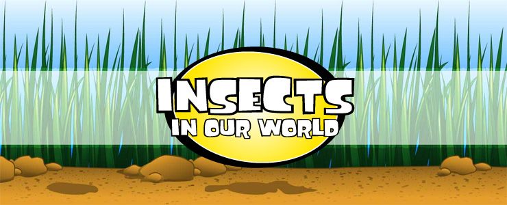 Insects in Our World