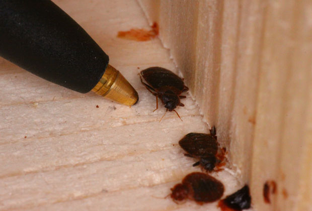 Port Elgin Truly Nolen Pest Control
