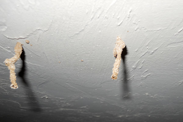 Termite Tubes on Ceiling