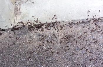 Ant Wars: Ant vs. Ant