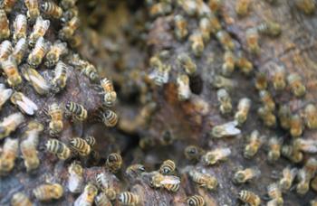 Truly Nolen Tips: Bees