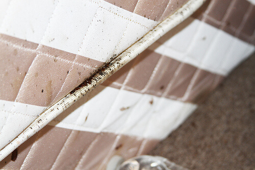 Black smudges in seams of a mattress indicate bed bug infestation.