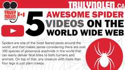 Canada-awesome-spider-videos-thumbnail