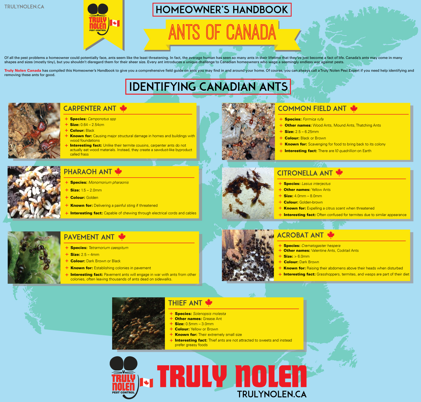 ants-of-canada-infographic-updated 051414