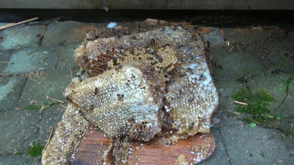 Bee Nest - Truly Nolen Canada