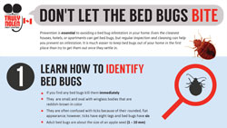 bed-bugs-canada-thumbnail