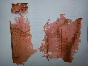 Silverfish damage to attic insulation chart found in a Merrickville home