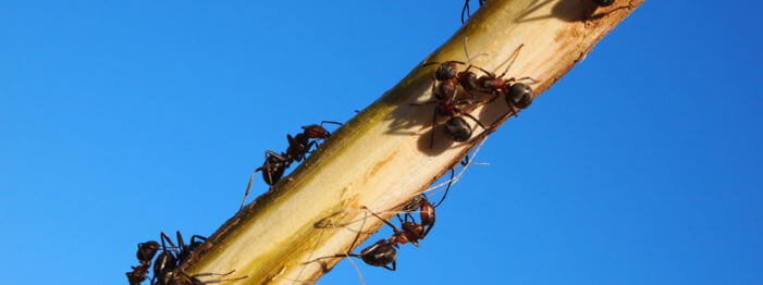 Warnings About Spring Carpenter Ants