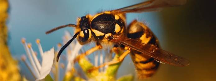 Wasps can be seen in the outdoors during summer. Even though they are generally identified as pests, they also play a key role in our eco-system.