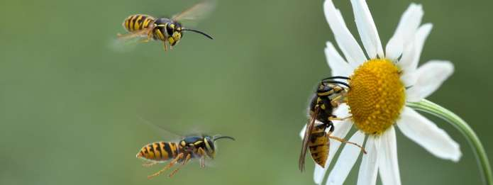 Wasps and a flower