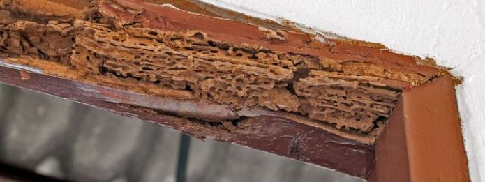Wooden door frame damaged by termites