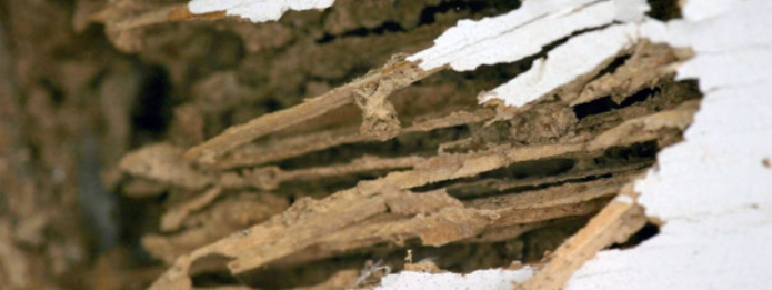 How to Tell the Difference Between Termite and Carpenter Ant Damage