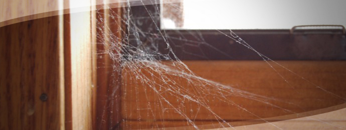 Are You Seeing More Spiders in Your House This Fall