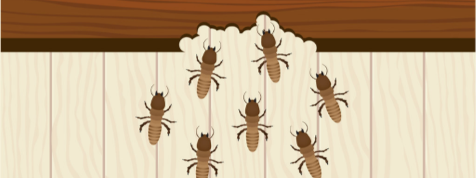 Signs of Pest Damage Inside Your Home