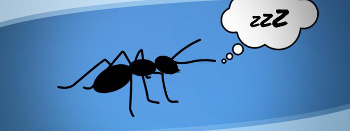 Sleeping Ant