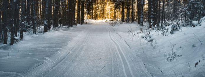 Does Cold and Snow Affect Pest Populations