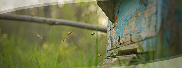 Flying Ants in Your Home