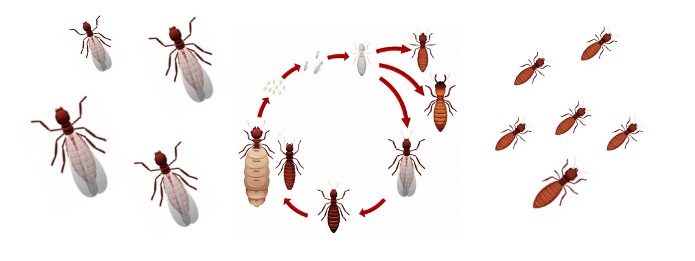 When Do Ants Breed