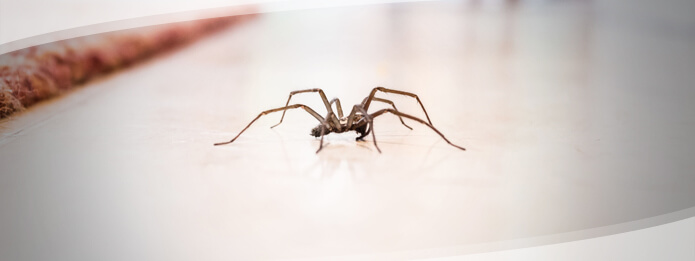 Do Spiders Eat Cockroaches and Bed Bugs