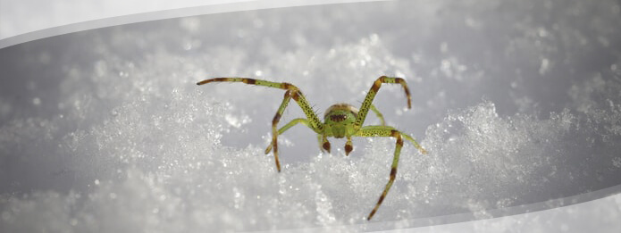 How Do Spiders Stay Warm in Winter
