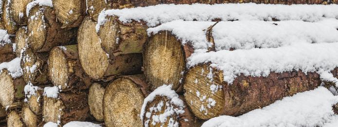 Where Do Carpenter Ants Go in Winter