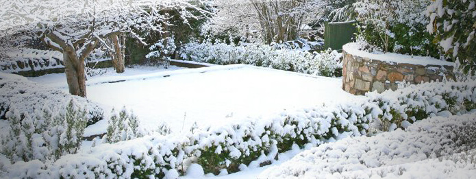 How to Achieve a Pest-free Garden this Winter