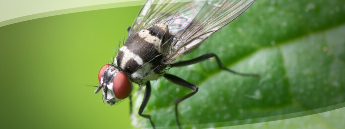 Notorious Insects that may Invade Your Home