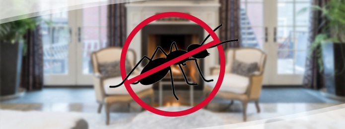 Ants in My House This Winter? Say It Isn't So!