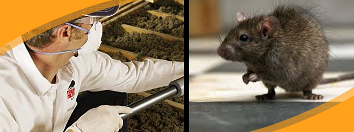 How a Pest Control Service Can Help You Handle a Rat Problem