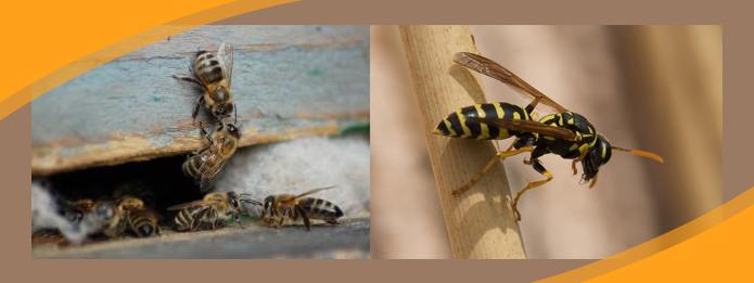 Wasp Behaviour