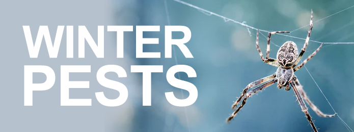 Kitchener Pest Control- Seasonal Pests to Watch Out For Part 1