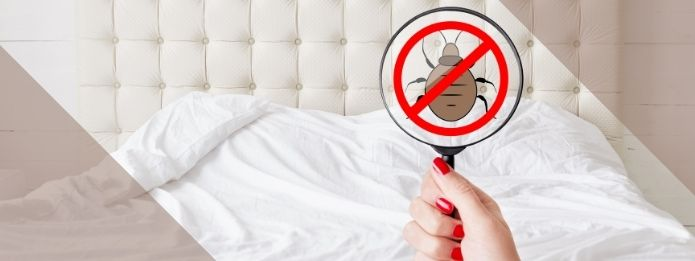 Bed Bugs: Their Habits and Life Cycle in Your Home