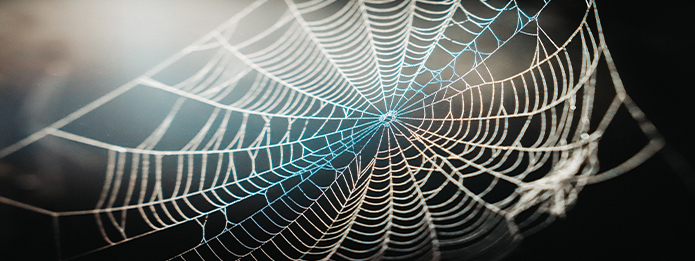 Spider Webs Identify A Spider By What They Weave