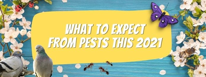What To Expect From Pests This 2021 3