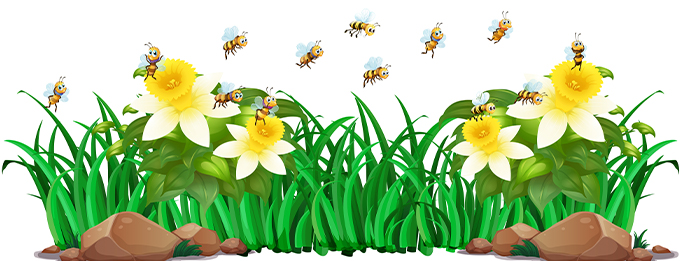 What's the Buzz About the Decline of Bees and Other Insect