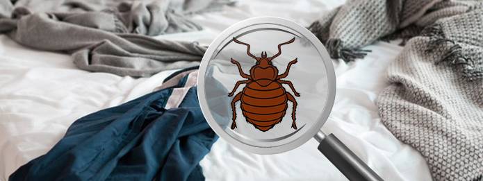 Do Bed Bugs Make Nests In A Home