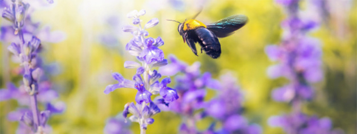 What Are Carpenter Bees