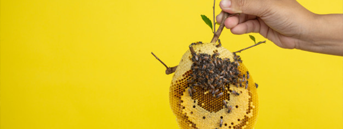 Guelph Pest Control Proper Bee Nest Removal and Prevention Tips
