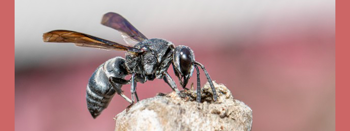 How To Get Wasps To Buzz Off This Summer