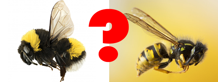 The Difference Between Bumblebees and Honey Bees