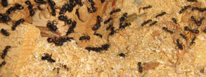 When Should You Expect to See Carpenter Ants
