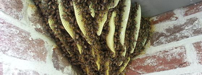Why Are Bees Attracted To Your House