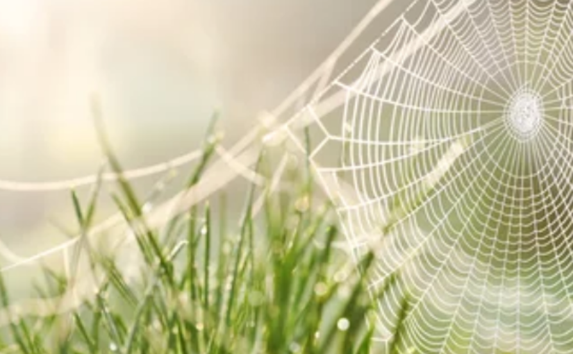 Everything You Need To Know About Spider Webs