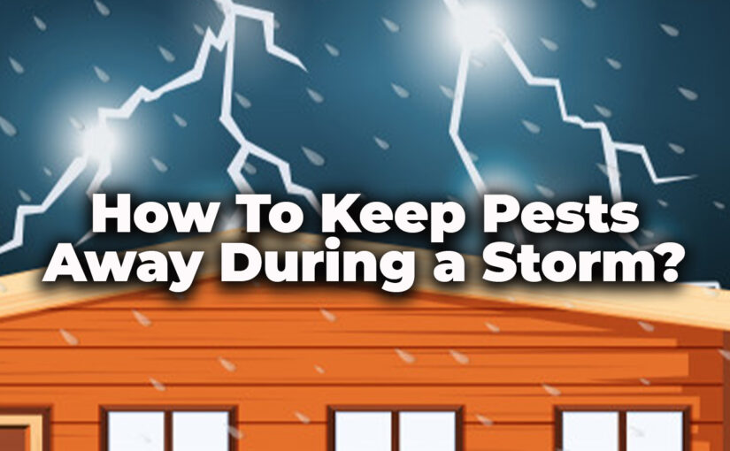 How To Keep Pests Away During a Storm