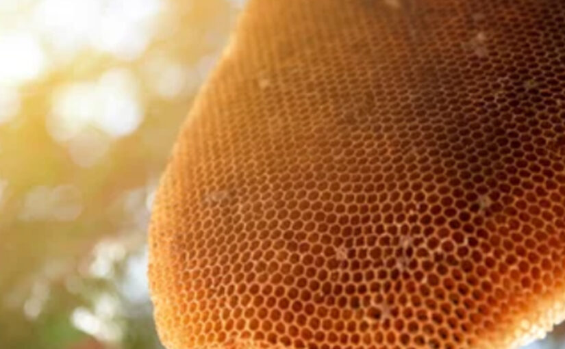 Would Bees Make Honey on Your Property