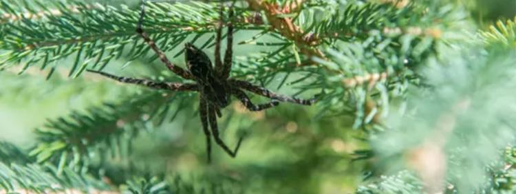 How Spiders Breathe