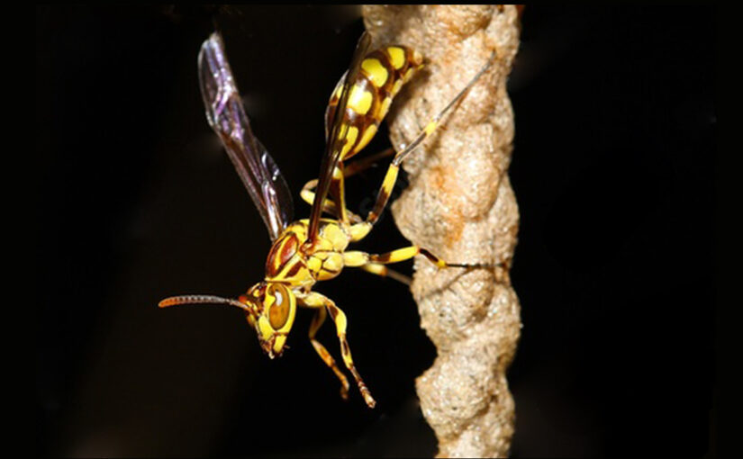 Will A Wasp Sting You At Night